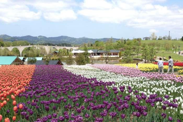新潟×ぽっちゃりデートスポット②:国営越後丘陵公園
