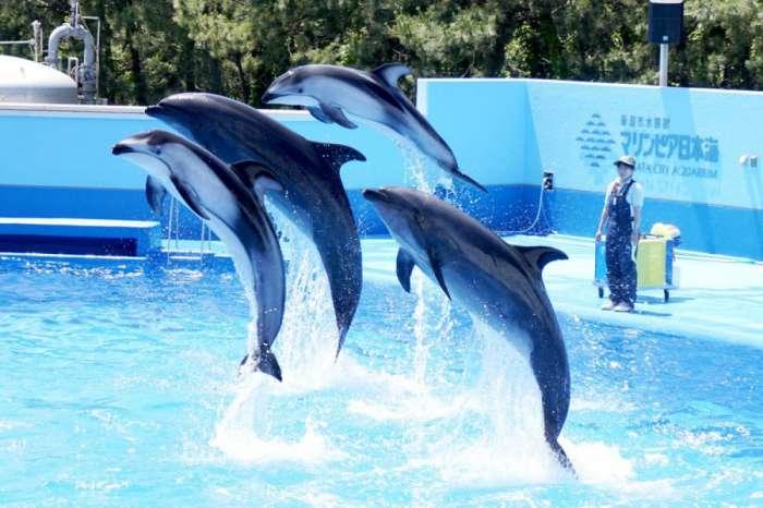 新潟×ぽっちゃりデートスポット①:新潟市水族館 マリンピア日本海